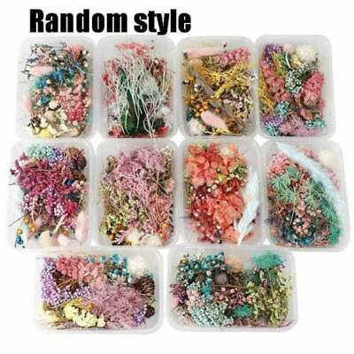 1Box Real Dried Leaf Flowers Plant Herbarium Jewelry Making Craft Home Decor NEW