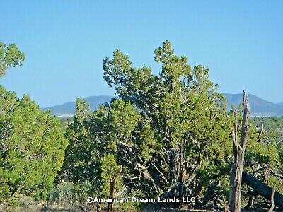 Grand Canyon Lot In Subdivision Valle Arizona 1.03 Acres Tall Trees Views!