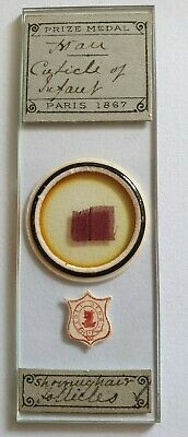 """Very Fine Antique Microscope Slide """"Hair Cuticle Of Infant"""" By A.c.cole"""