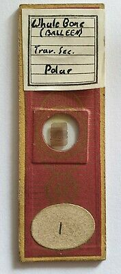 """Very Fine Antique Microscope Slide """"Whale Bone"""" By C.m.topping"""