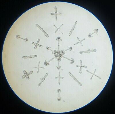 """Very Fine Antique Microscope Slide """"Arranged Spicules"""" By A.c.cole"""