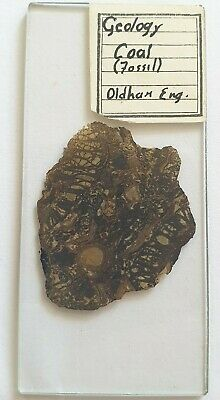 """Very Fine Antique Oversized Geological Microscope Slide """"Coal Fossil Oldham"""""""