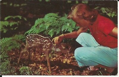 Vintage Postcard - Greetings from Stamford Conn. - Fawn Deer - Unposted