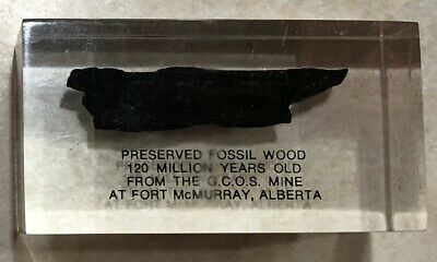 FOSSIL WOOD 120 MILLION YEARS OLD FROM FORT McMURRAY IN LUCITE DESK DISPLAY