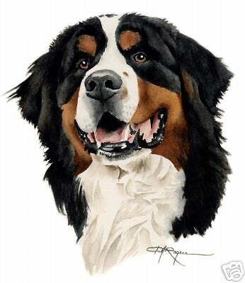 BERNESE MOUNTAIN DOG Painting ART LARGE 11 x 14  DJR