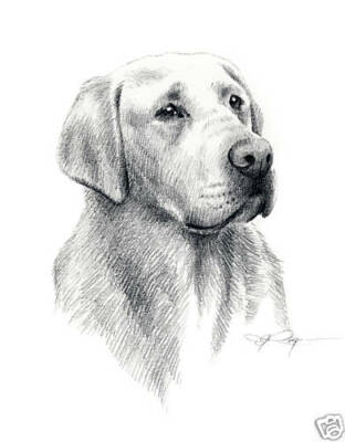 LABRADOR RETRIEVER Dog Drawing ART 13 X 17 Signed DJR