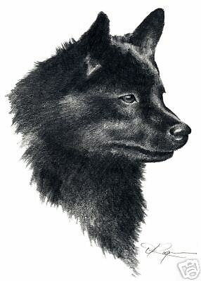 SCHIPPERKE Dog Drawing ART 13 X 17 LARGE Signed DJR