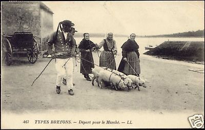 france, Types Bretons, People with Pigs going to Market