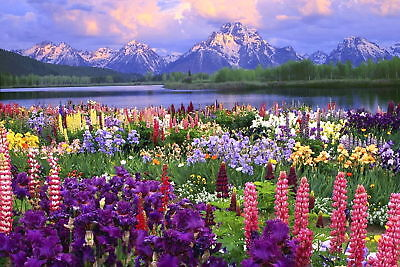 Mountain Flower View Canvas Print 20*30 Inch HUGE !