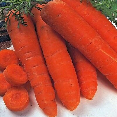 Vegetable Carrot Autumn King 2 pelleted 300 Seeds