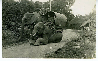 1940s RPPC Postcard Singapore Man on Elephant