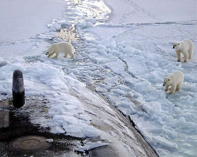 Polar Bears Approach Uss Honolulu 8X10 Photo
