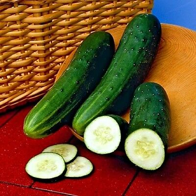 Vegetable Cucumber Perfection 100 seeds