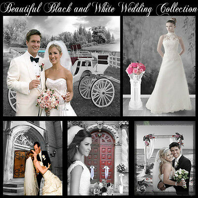 Digital Backgrounds Photography Backdrops Green Screen BLACK AND WHITE WEDDING**