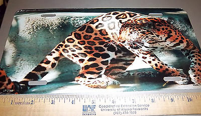 Beautiful Leopard Photograph Novelty Metal License Plate, fantastic collectible!