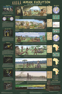 (Laminated) Human Evolution Poster (61X91Cm) Educational Wall Chart Picture Art
