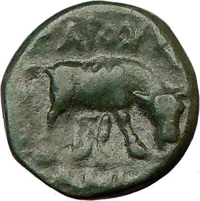 PELLA Macedonia 168BC Ancient  Greek Coin ATHENA Wisdom & BULL  i21965
