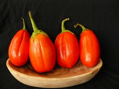 EGGPLANT 'Red Square' 35+ seeds UNUSUAL high yield vegetable garden HOT CLIMATES