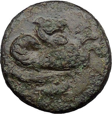 Skepsis in Troas 350BC Ancient Greek Coin Pegasus winged horse Fir tree  i31791