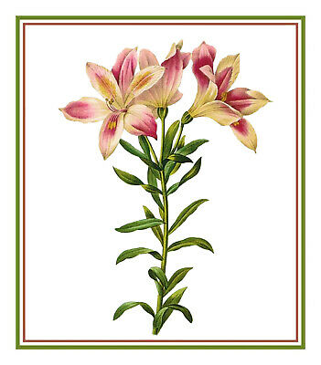Redoute Flower Bird of Paradise Illustration Counted Cross Stitch Pattern