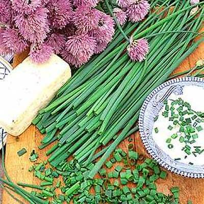 CHIVES 150+ seeds companion plant healthy HERB garden vegetable seeds onion easy