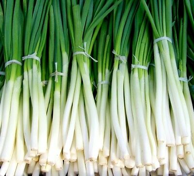 SHALLOT 'Bunching' 150 vegetable seeds onion garden EASY TO GROW