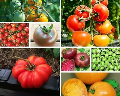 HEIRLOOM TOMATO PACK 12 packets 200+ seeds mixed fruit VEGETABLE SEEDS garden