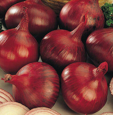 Vegetable Onion Karmen Red  Appx 250 seeds