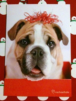 ONE BULLDOG WITH BOW~DOG~CHRISTMAS HOLIDAY CARD~NEW!