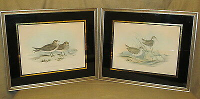 Pair Antique Shore Bird Hand Colored Prints by Gould Ornithological