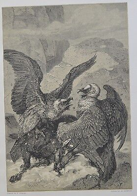 Antique Print. Lammergeiers and Their Prey. Switzerland, 1881.