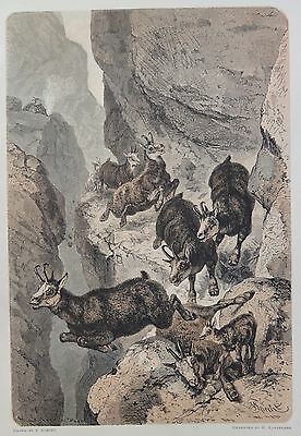 Antique Print. Chamois Hunted on a Narrow Ledge. Switzerland, 1881.