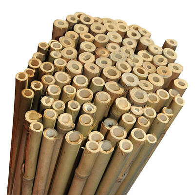 2Ft 3Ft 4Ft 5Ft 6Ft Bamboo Garden Canes Strong Thick Quality Support Green Canes