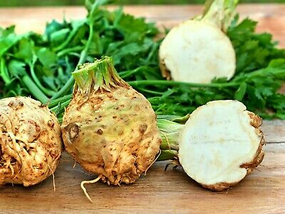 CELERIAC 'White' 200+ seeds vegetable garden UNUSUAL celery root UGLY soups stew