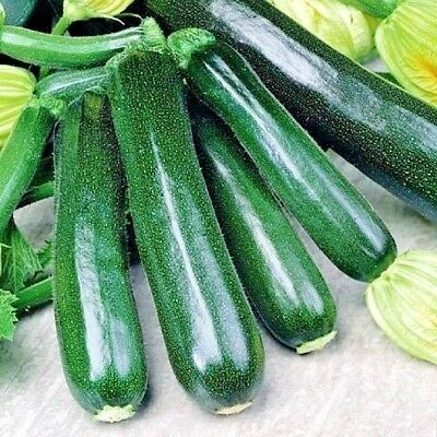 Vegetable Courgette Black Beauty 30 seeds Dark Fog Zucchini
