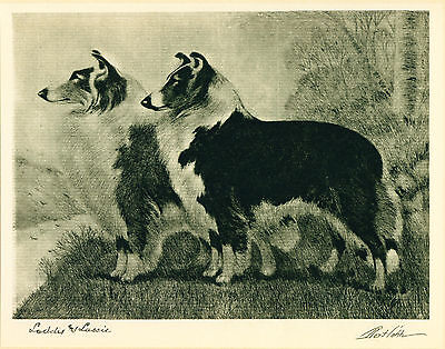 Dog Print 1931 Collie Dogs by Bert Cobb VINTAGE