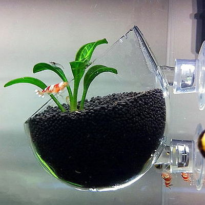 TNA Plant Glass Pot - Aquarium Deko Vase für Pflanzen, Aquascaping & Garnelen