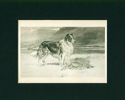 Antique Dog Print + Breed Article 1899 Collie Dog by Arthur Wardle
