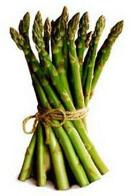 ASPARAGUS 'Mary Washington' 25+ seeds perennial vegetable garden HEIRLOOM nongmo