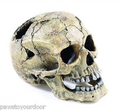 Aquarium Fish Tank Human Skull Ornament Large 20cm Cave Decoration Classic 2966