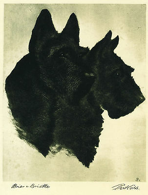 Dog Print 1931 Scottish Terrier Dogs by Bert Cobb VINTAGE