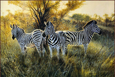 "Canvas prints Zebra oil painting fine quality animals art for wall decor 20""X30"""