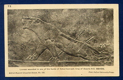 *** British Museum - Lioness wounded in hunt of king of Assyria *** CPA 0385