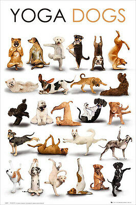 (LAMINATED) Yoga Dogs POSTER (61x91cm) Picture Print New Art