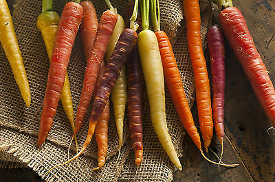 3900mg RAINBOW CARROT SEED MIX ~1400ct White Yellow Purple Red Root Storage USA