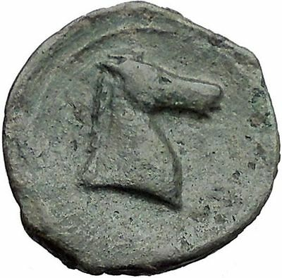 Carthage in Zeugitana 300BC RARE Ancient Greek Coin Horse Palm tree  i46539