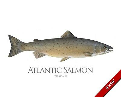 Atlantic Salmon Fish Painting Ocean Freshwater Fishing Art Real Canvas Print