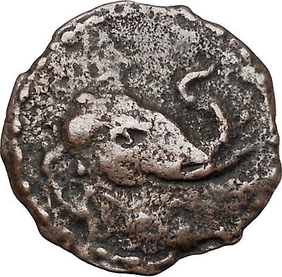 MAUES 125BC Indo-Skythian India ELEPHANT GANESH or BUDDHA Rare Greek Coin i46902