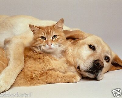 Dog and Cat 8 x 10 / 8x10 GLOSSY Photo Picture