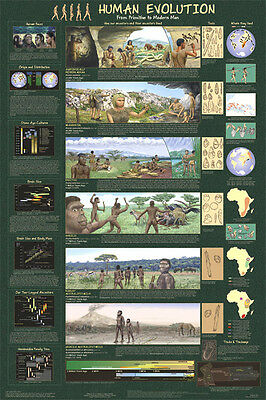 HUMAN EVOLUTION POSTER (61x91cm) EDUCATIONAL WALL CHART PICTURE PRINT NEW ART